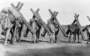 Camels carrying telegraph poles, 1870